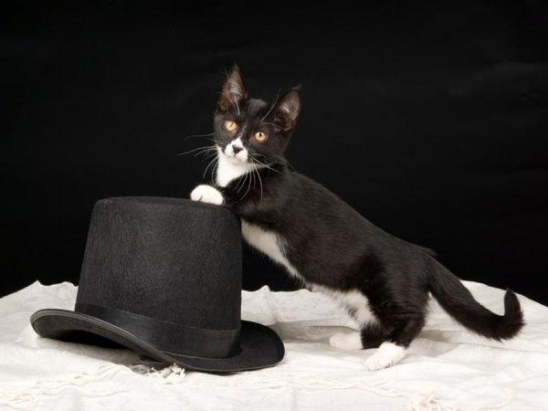 Манчкин и шляпа