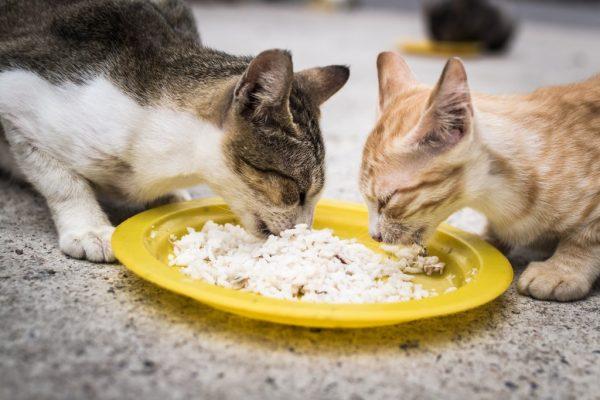 Кошки едят кашу