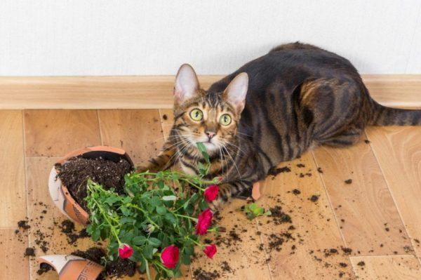 Кошка ест землю