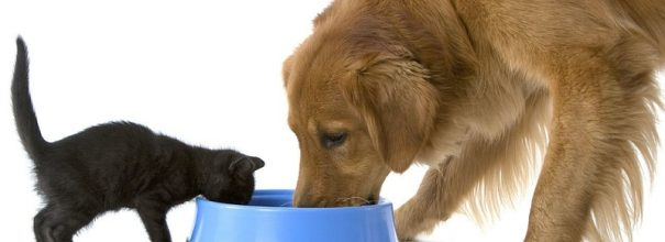 Кошка ворует корм у собаки