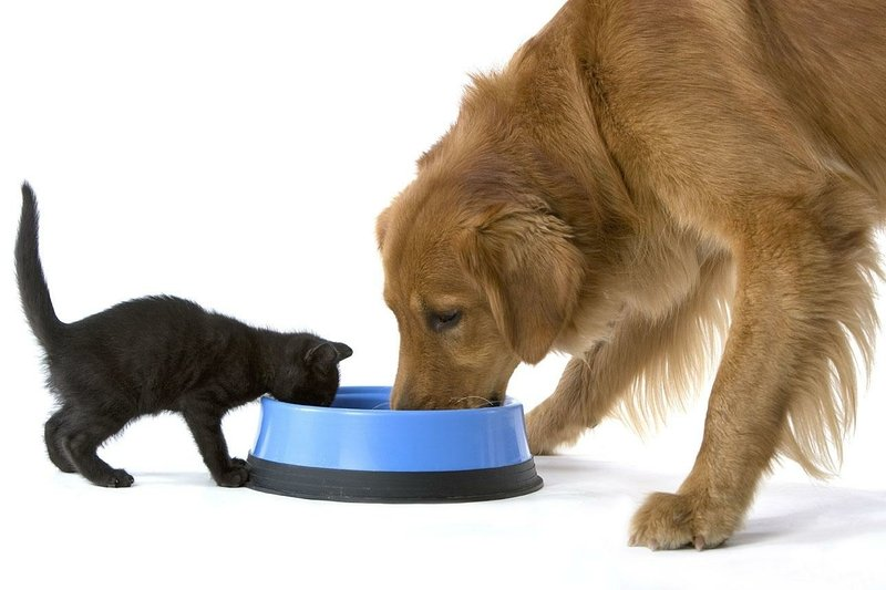 Можно ли кормить собаку сухим или мягким кошачьим кормом? Почему собака ест кошачий корм: причины, вредно ли это, последствия. Что будет, если собаку кормить кошачьим кормом?