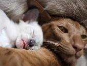 Кошка и котята лежат