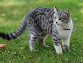 Кошка стоит на траве
