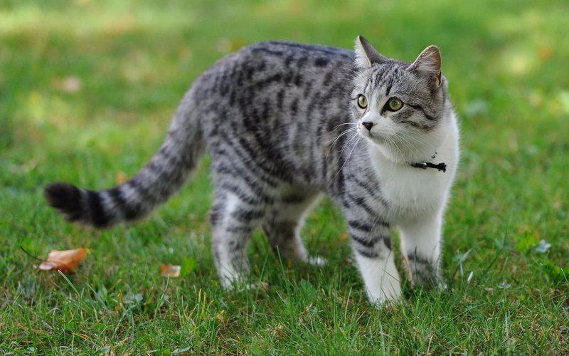 Как лечить цистит в домашних условиях у кошки