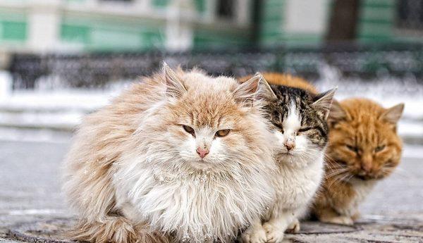Бездомные кошки сидят на улице