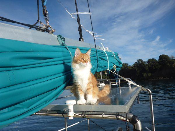 Кот на корабле