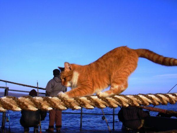 Кот на канате