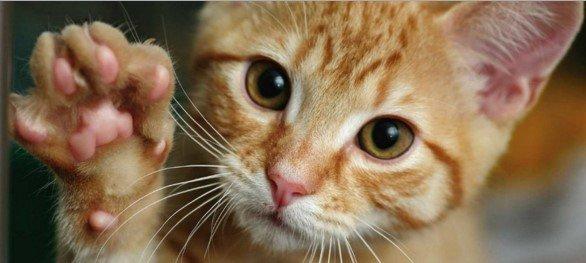 Кот показывает лапу
