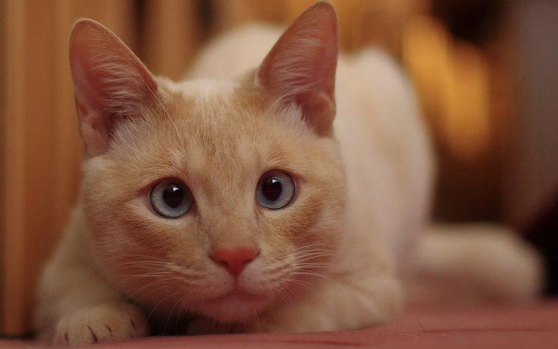 Стоморджил для кошек и собак: инструкция по применению средства против инфекционных заболеваний, показания, цена