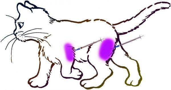 Места для внутримышечного укола у котов