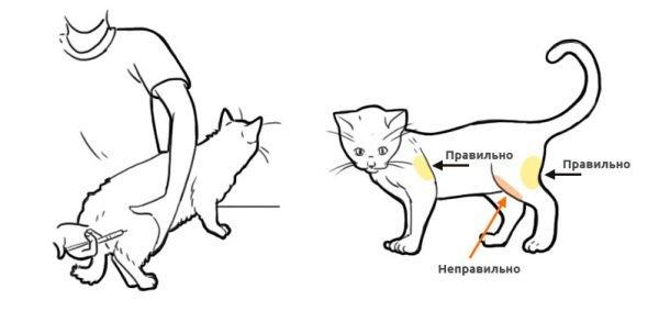Внутримышечный укол коту