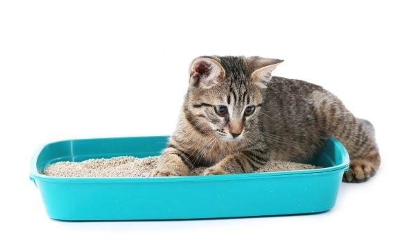 Котёнок лежит в лотке