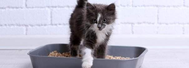 Кошка отказывается от лотка