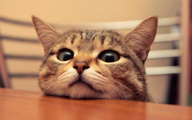 Как видят кошки - цвета, сколько кадров в секунду, как далеко, потусторонний и наш мир