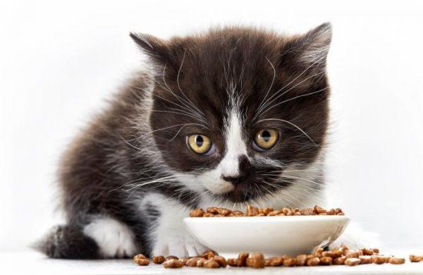 Котёнок и сухой корм