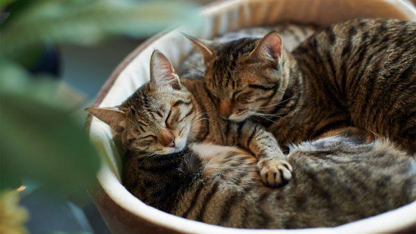 Кошки спят рядом друг с другом