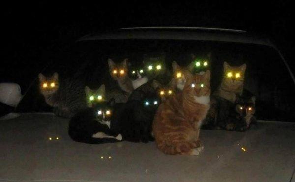 Коты в темноте