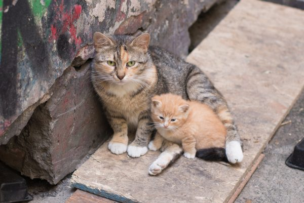 Кошка и котёнок сидят на улице