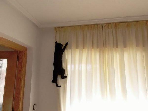 Кошка карабкается по шторам