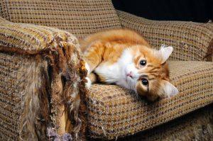 Кошка дерёт мебель
