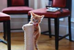 Котёнок и когтеточка