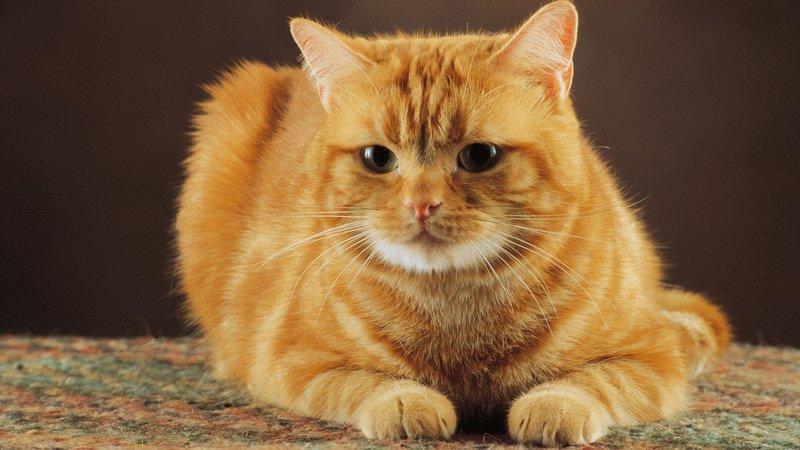 Гноение глаз у кошки чем лечить распространенные причины