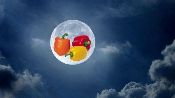 Перец по лунному календарю