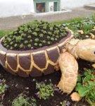 Клумба из покрышки в виде черепахи