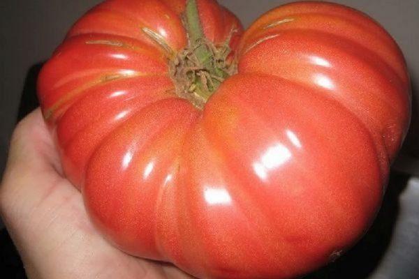 Сорт томатов Сибирские шаньги