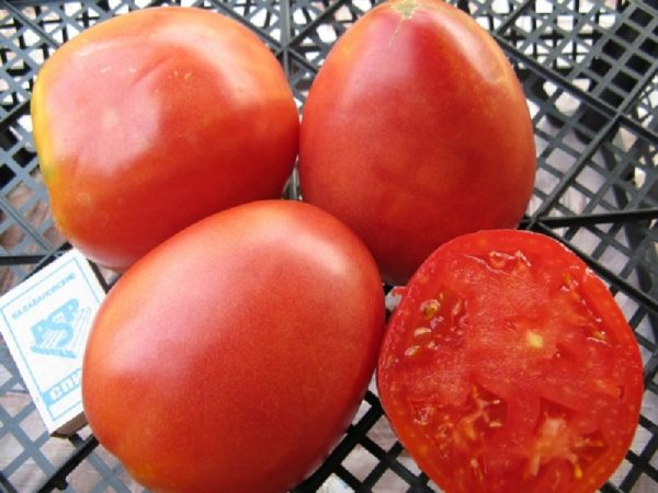 Сорт томатов Настенька