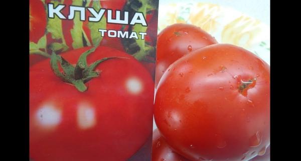 Сорт томатов Клуша