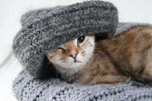 Кошка спит на одежде