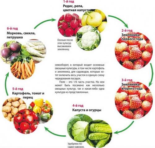 Схема севооборота с участием ягодников