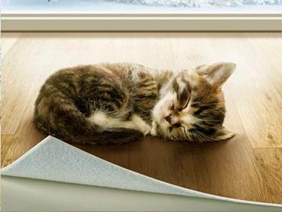 Котёнок на линоленуме