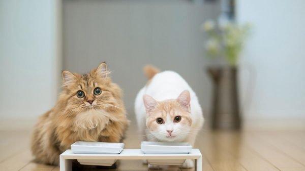 Два кота у кормушки