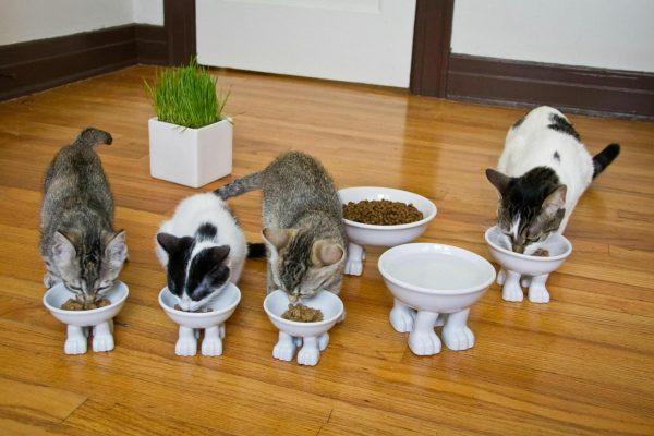 Коты едят из мисочек с ногами