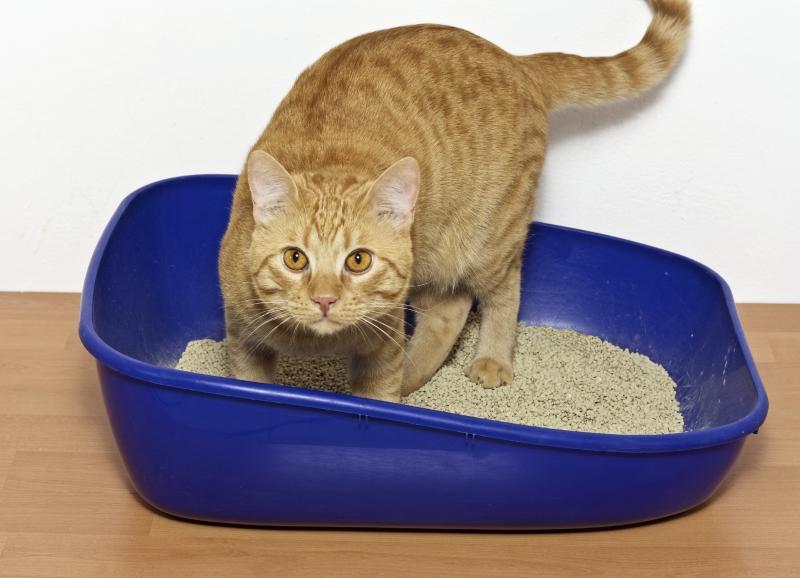 Особенности закрытого лотка для кошки