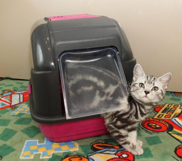 Кошачий лоток-домик