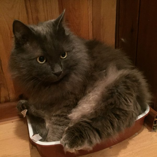 Большой кот в маленьком лотке