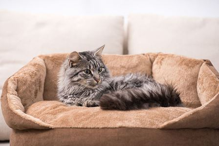 Картинки по запросу кошка в лежанке
