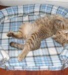 Овальный лежак из байковой рубашки в клетку с бортиком-валиком, на изделии развалился кот