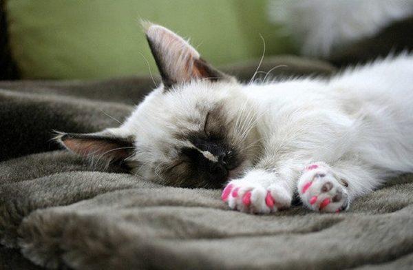 Антицарапки на маленьком котёнке