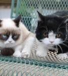 Грампи Кэт с братом