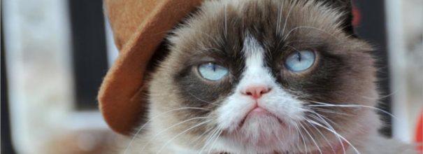 Сердитая кошка - Грампи Кэт