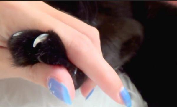 лапка кошки с выпущенными коготками