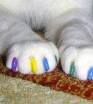 Разноцветные коготки