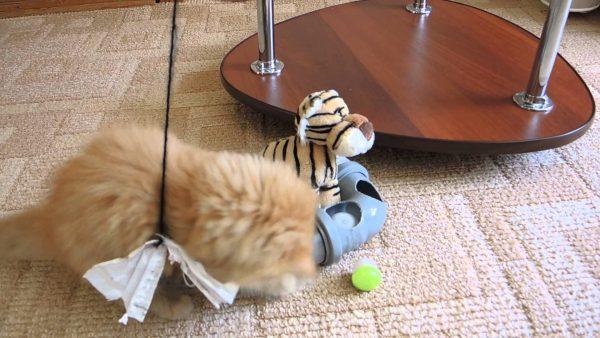 Самостоятельно играющийся котёнок