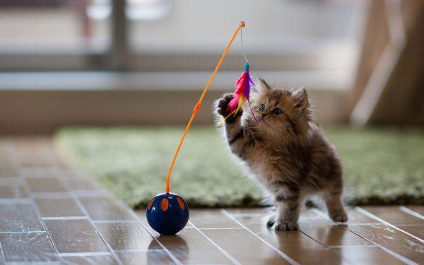 котёнок знакомится с новой игрушкой
