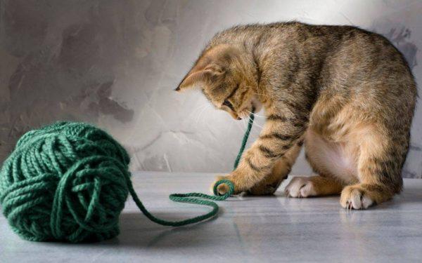 Кошка с клубком ниток