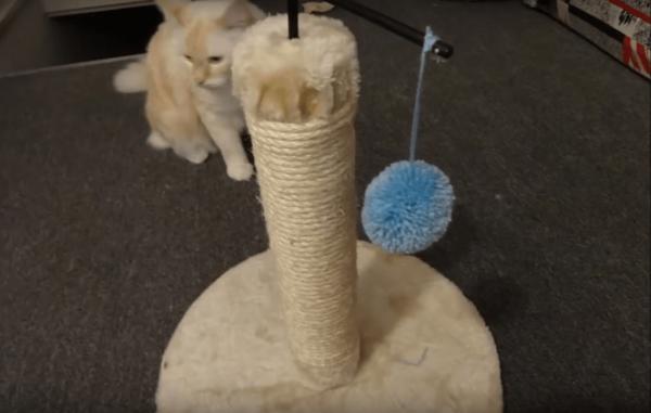 Кошка играет с помпоном
